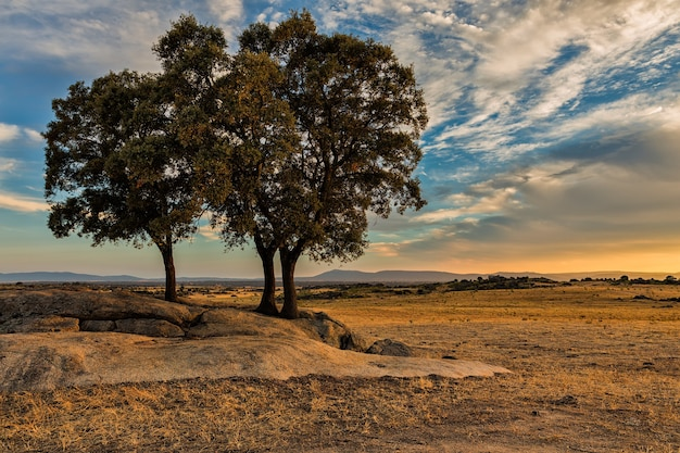 Faszinierende aufnahme einer schönen landschaft mit bäumen und sonnenuntergang