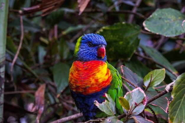 Faszinierende aufnahme eines bunten papageis auf unscharfem hintergrund
