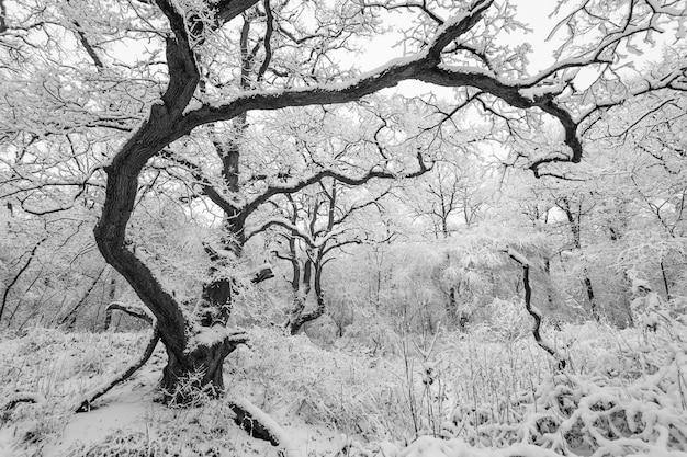 Faszinierende aufnahme eines waldes mit bäumen, die im winter mit schnee bedeckt sind