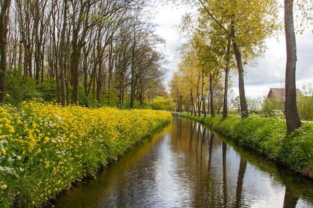 Faszinierende aussicht auf den fluss, umgeben von gelben blumen und hohen bäumen in einer niederländischen landschaft