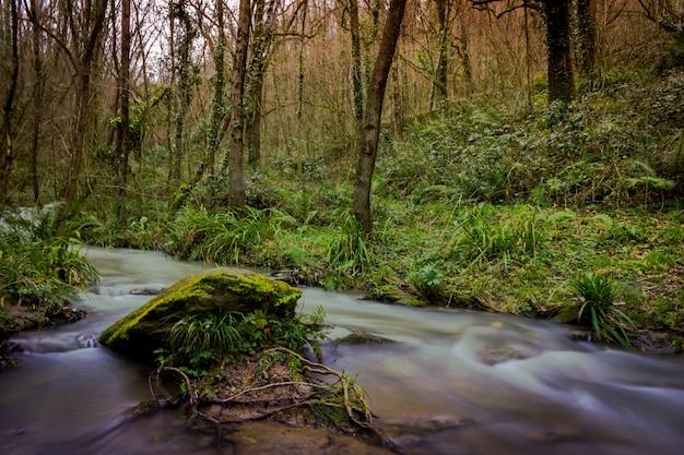 Faszinierende aussicht auf den wasserstrom im wald, umgeben von gras und bäumen
