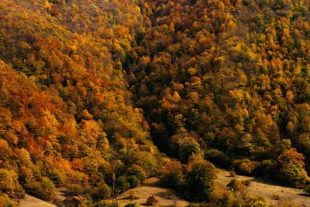 Faszinierende natur, die berghänge sind mit bäumen und pflanzen bedeckt, in den strahlen der sonne