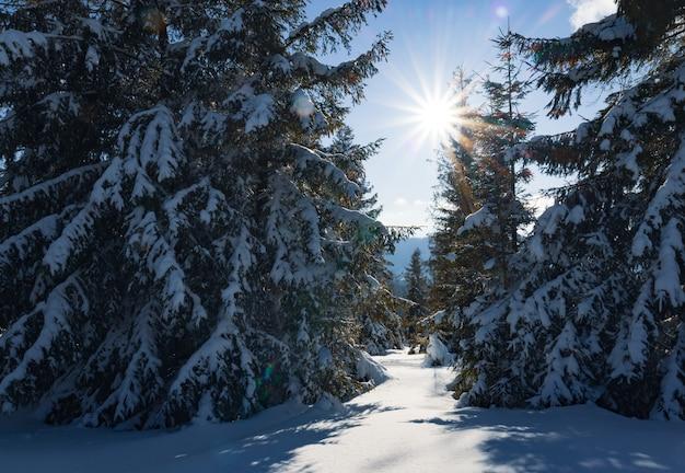 Faszinierende sonnige landschaft eines winterwaldes an einem verschneiten hang an einem sonnigen, frostigen wintertag. das ende eines urlaubs im skigebiet