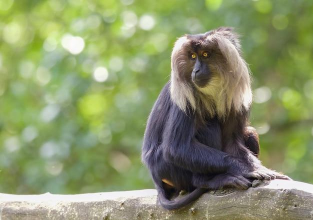 Faszinierender schuss von schimpansen