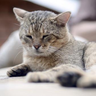 Faule getigerte katze, die auf der couch nickerchen macht