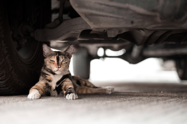 Faule katze unter auto versteckt