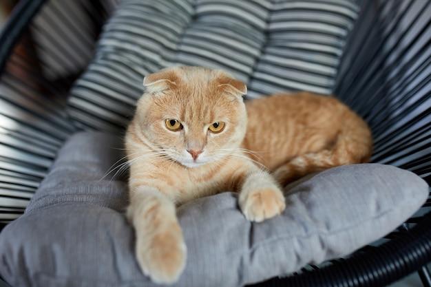 Faule tabby-ingwer-katze, die sich auf einem kissen auf einem weichen sessel entspannt