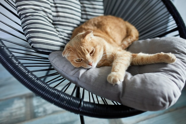 Faule tabby-ingwer-katze, die sich auf einem kissen auf einem weichen sessel im hellen, modernen wohnzimmer entspannt