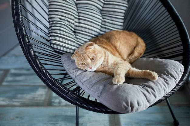 Faule tabby-ingwerkatze, die sich auf einem kissen auf einem weichen sessel im hellen, modernen wohnzimmer entspannt