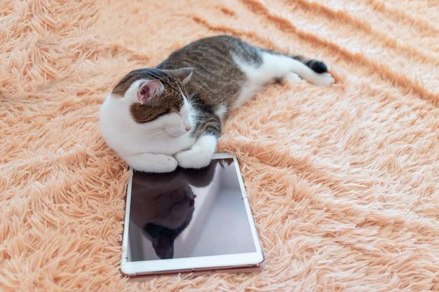Faule tabbykatze liegt nahe bei einer tablette auf der couch. winter- oder herbstwochenendenkonzept, draufsicht.