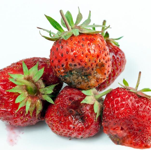 Faule und schimmelige rote reife erdbeere auf einer weißen schüssel
