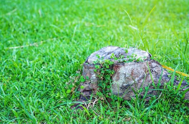 Fauler holzhintergrund auf grünem gras, selektiver fokus
