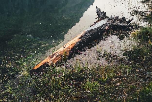 Fauler umgestürzter baumstamm schwimmt in ruhigem wasser in ufernähe mit reicher flora schönes treibholz im wasser