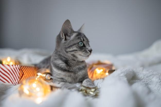 Faules grau getigertes kätzchen, das sich auf einer weichen wolldecke auf einem sofa mit weihnachtsbeleuchtung g...
