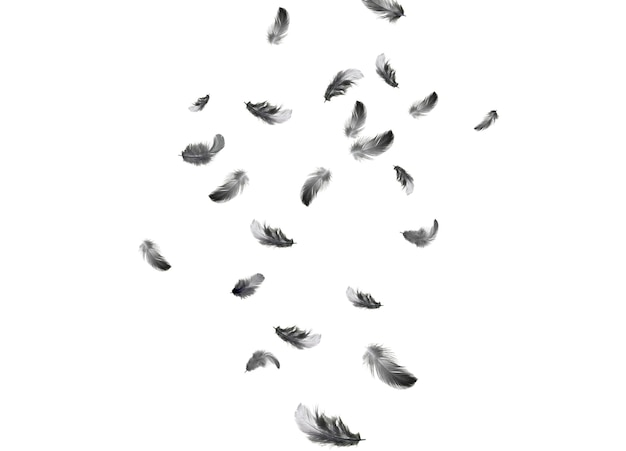 Feder abstrakten hintergrund. schwarze federn fallen in die luft