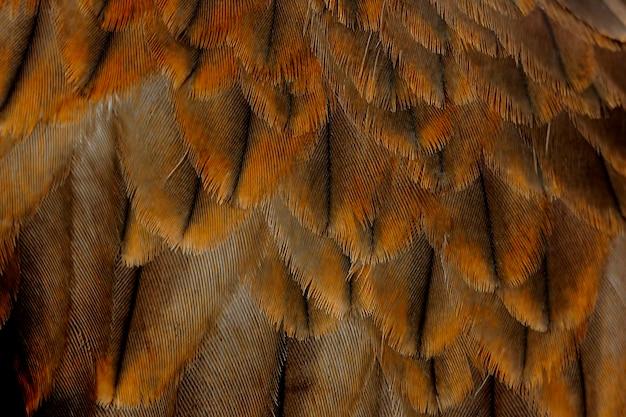 Feder des schwarzmilans pariah-drachen milvus migrans