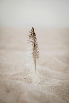 Feder im sand