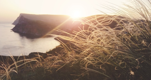 Federgras am meer zur goldenen stunde im abendlicht