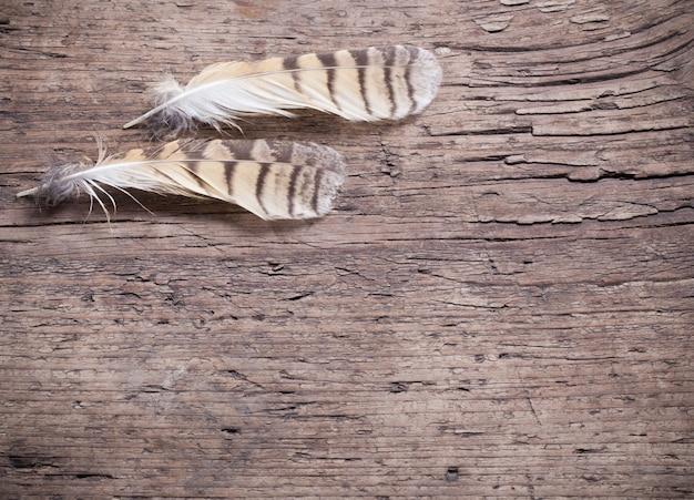 Federn eines vogels auf einem holztisch