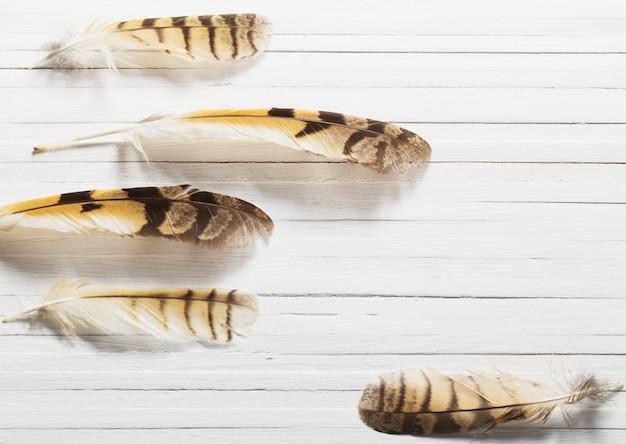Federn eines vogels auf einem wald