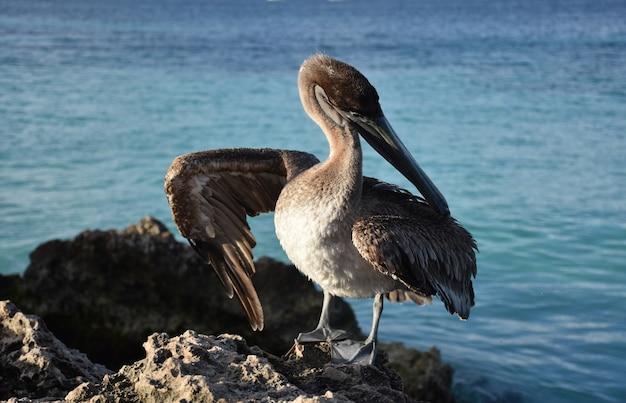 Federn getrennt, nachdem sie von einem pelikan geputzt wurden