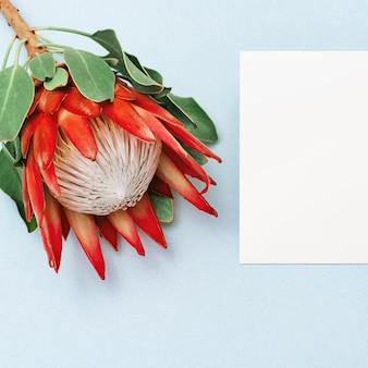 Feierhintergrund mit schönem blume protea, großer exotischer anlage und exemplarplatz. grußkarte für wünsche. ansicht von oben.