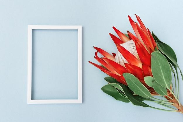 Feierhintergrund mit schönem blumenprotea, großer exotischer pflanze und weißem rahmen mit kopienraum für ihren text. grußkarte für wünsche. draufsicht.