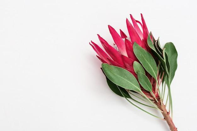 Feiern sie mit wunderschönem blumenprotea, großer exotischer pflanze und kopierraum für ihren text