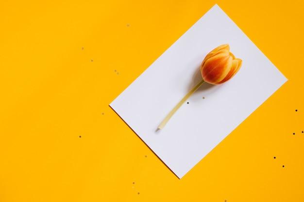 Feiertagssterndekorationen und weißer sauberer freier raum mit tulpe auf gelbem hintergrund