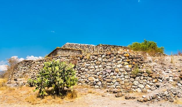 Feigenkaktuspflanze an der archäologischen stätte yagul im mexikanischen bundesstaat oaxaca