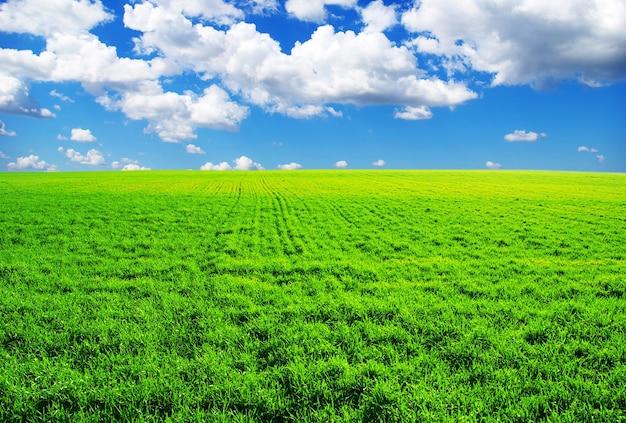 Feld auf einem hintergrund des blauen himmels