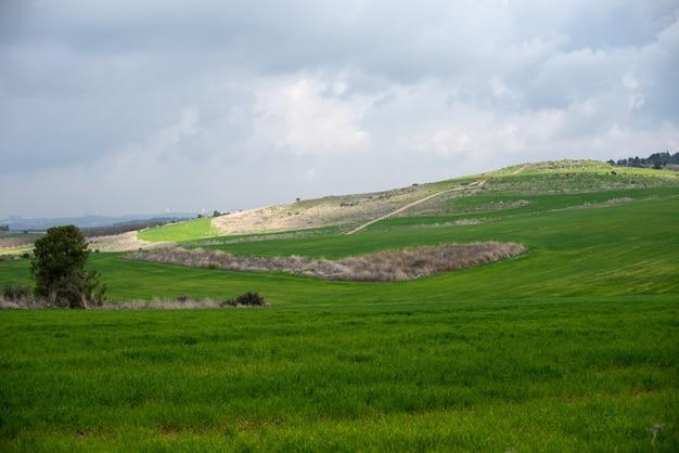 Feld bedeckt im grünen unter einem bewölkten himmel und sonnenlicht am tag