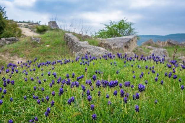 Feld der blauen blumen auf grünem gras mit bergen im hintergrund