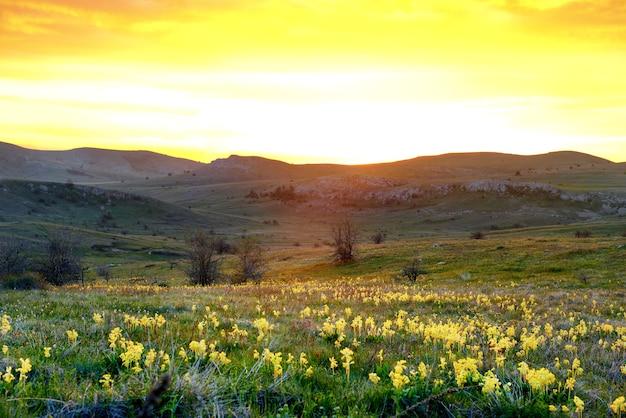 Feld der gelben blumen mit bergen und sonnenunterganghimmel