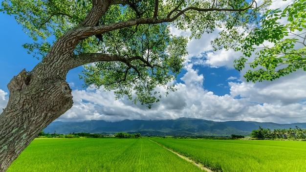 Feld der himmel bäume