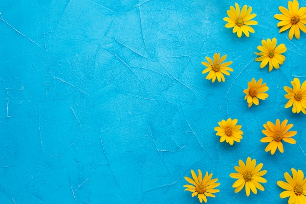 Feld der spanischen austerndistel blüht auf blauem hintergrund