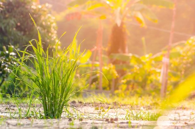 Feld des grases und der sonne am morgen
