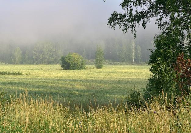 Feld im morgennebel