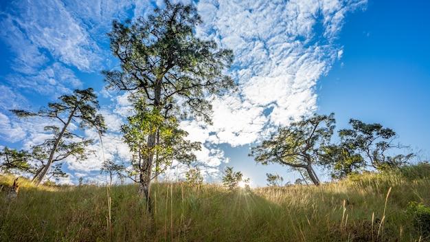 Feld in den bergen während des schönen sonnenlichts mit blauem himmel und wolkig