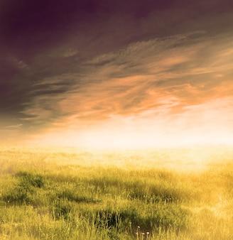 Feld mit dunklen wolken