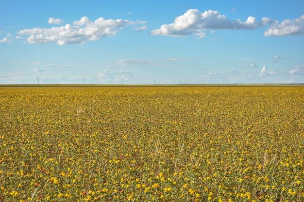 Feld mit gelben stacheligen blumen