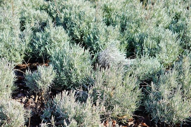 Feld mit grünen pflanzen