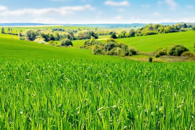 Feld mit grüner vegetation und bäumen in der ferne bei sonnigem wetter