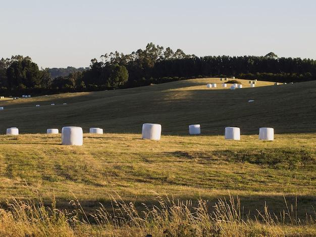 Feld mit kombiniertem grasheu, umgeben von bäumen