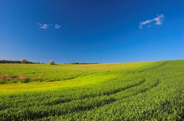 Feld mit traktormarken