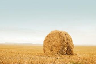 Feld nach der Ernte, große Rundballen Stroh. Staple das goldene Stroh