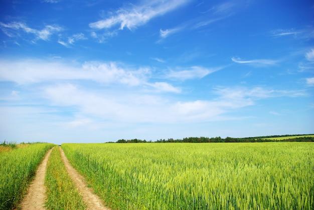 Feld und eid an sonnigen tagen