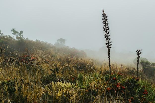 Feld voller verschiedener wildblumen und eines nebligen himmels