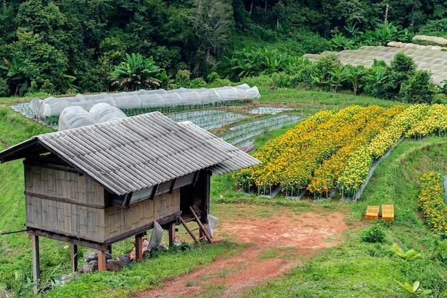 Feld von blühenden gelben und purpurroten blumen und von gutshaus