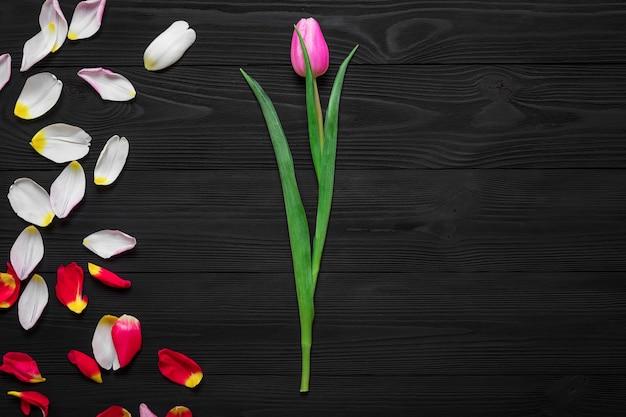 Feld von den tulpenblumenblättern lokalisiert auf hölzernem hintergrund
